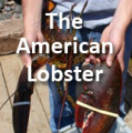 The American Lobster